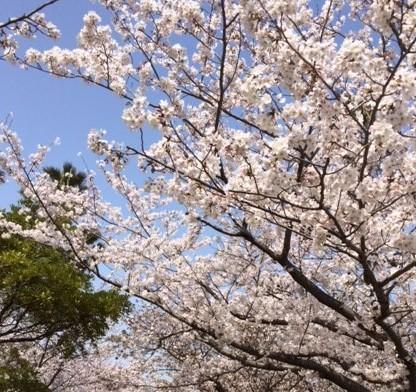29日津田公園
