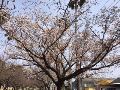 花見_190330_0001